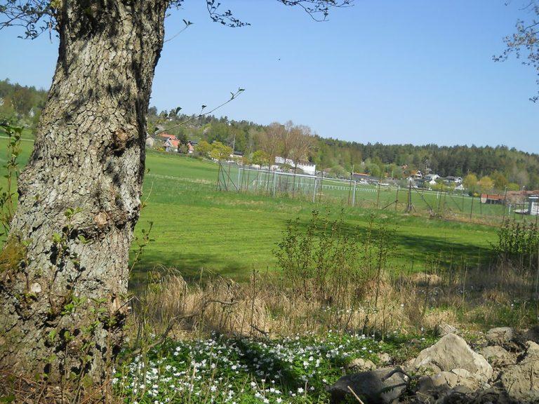 Isadoras memorial tree